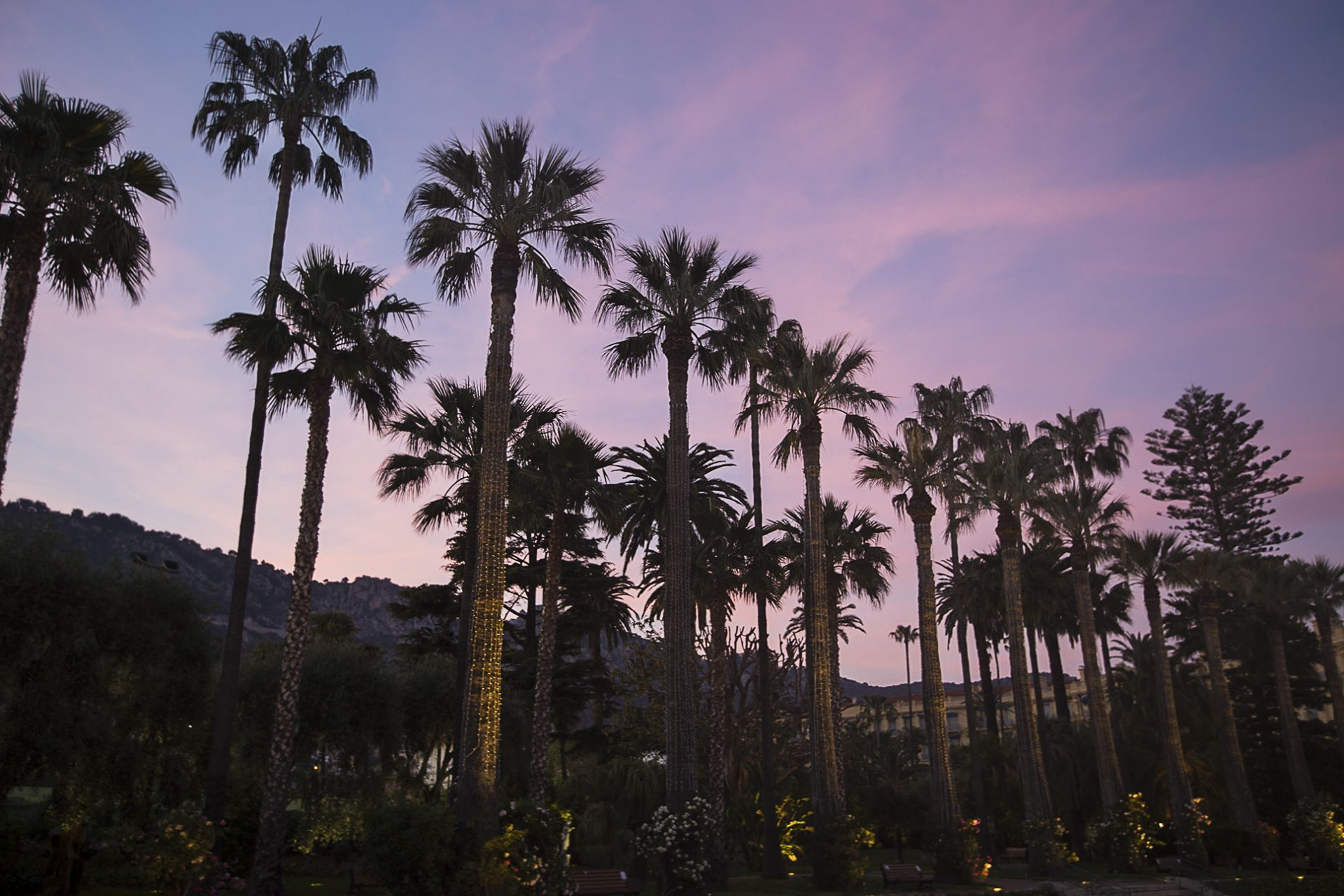 Sunset and palm trees at Beaulieu-sur-mer French Riviera