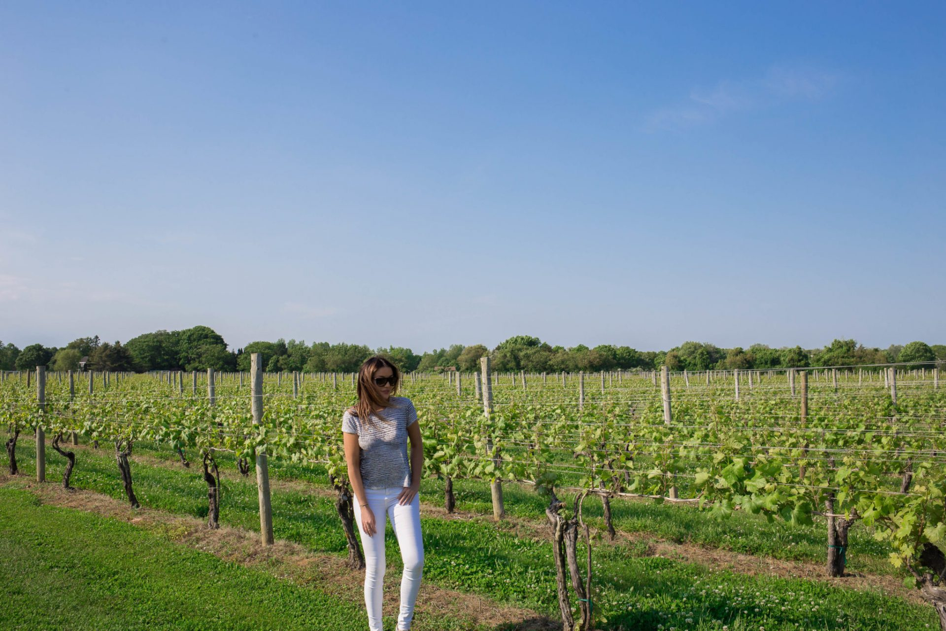 Wolffer Estate Vineyards The Hamptons