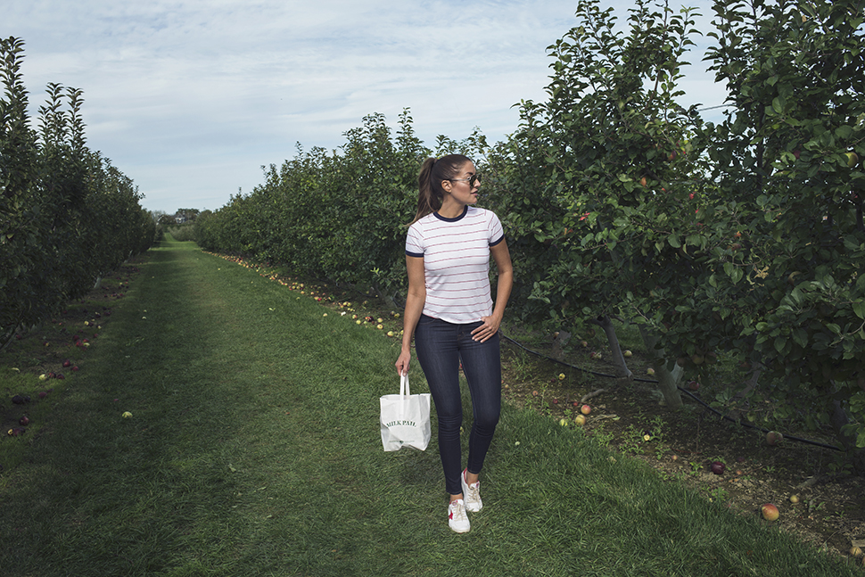 Apple picking in The Hamptons