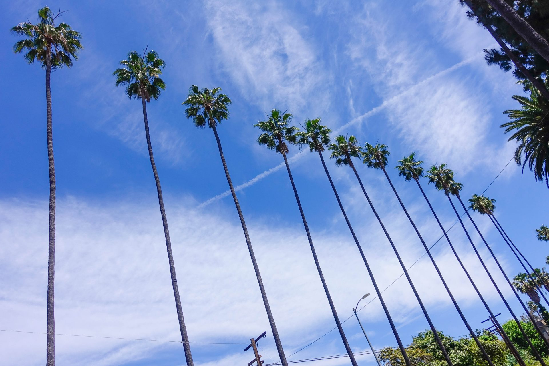 Palm Trees La La Land